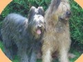 Une vie de chiens_465