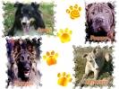 Une vie de chiens_46