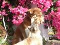 Une vie de chiens_471