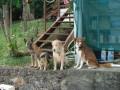 Une vie de chiens_473