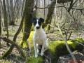 Une vie de chiens_474