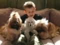 Une vie de chiens_478
