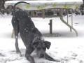 Une vie de chiens_493