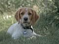 Une vie de chiens_501