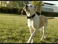 Une vie de chiens_519