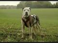 Une vie de chiens_520