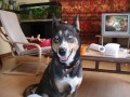 Une vie de chiens_521