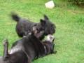 Une vie de chiens_533