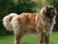 Une vie de chiens_538