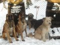 Une vie de chiens_540
