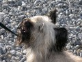 Une vie de chiens_542