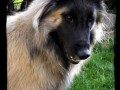 Une vie de chiens_547