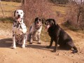 Une vie de chiens_551