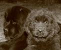 Une vie de chiens_55