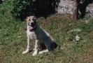 Une vie de chiens_61