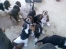 Une vie de chiens_62