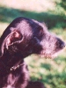 Une vie de chiens_65