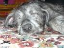 Une vie de chiens_72