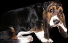 Une vie de chiens_80