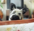 Une vie de chiens_89