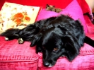 Une vie de chiens_91