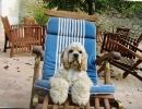 Une vie de chiens_96