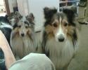 Une vie de chiens_9