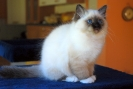 Vie de chats_10