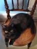 Vie de chats_1