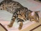 Vie de chats_2