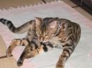 Vie de chats_3