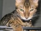 Vie de chats_4