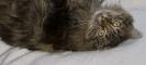 Vie de chats_5