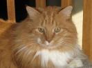 Vie de chats_6