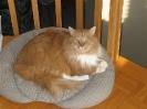 Vie de chats_7