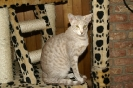 Vie de chats_8