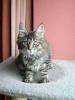 Vie de chats_9