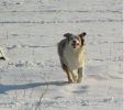 Courrir dans la neige