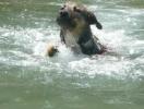 J'adore nager.