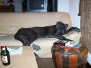 Une vie de chiens_105