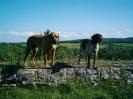 Une vie de chiens_116