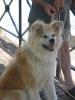 Une vie de chiens_123