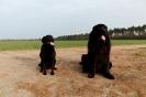 Une vie de chiens_125