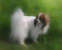 Une vie de chiens_140