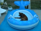 Une vie de chiens_147