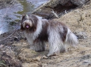 Une vie de chiens_171