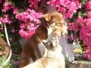 Une vie de chiens_195