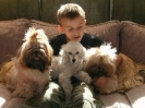 Une vie de chiens_202