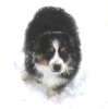 Une vie de chiens_214