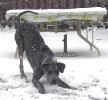 Une vie de chiens_217